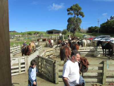 horses, riding, auckland, woodhill forest, auckland