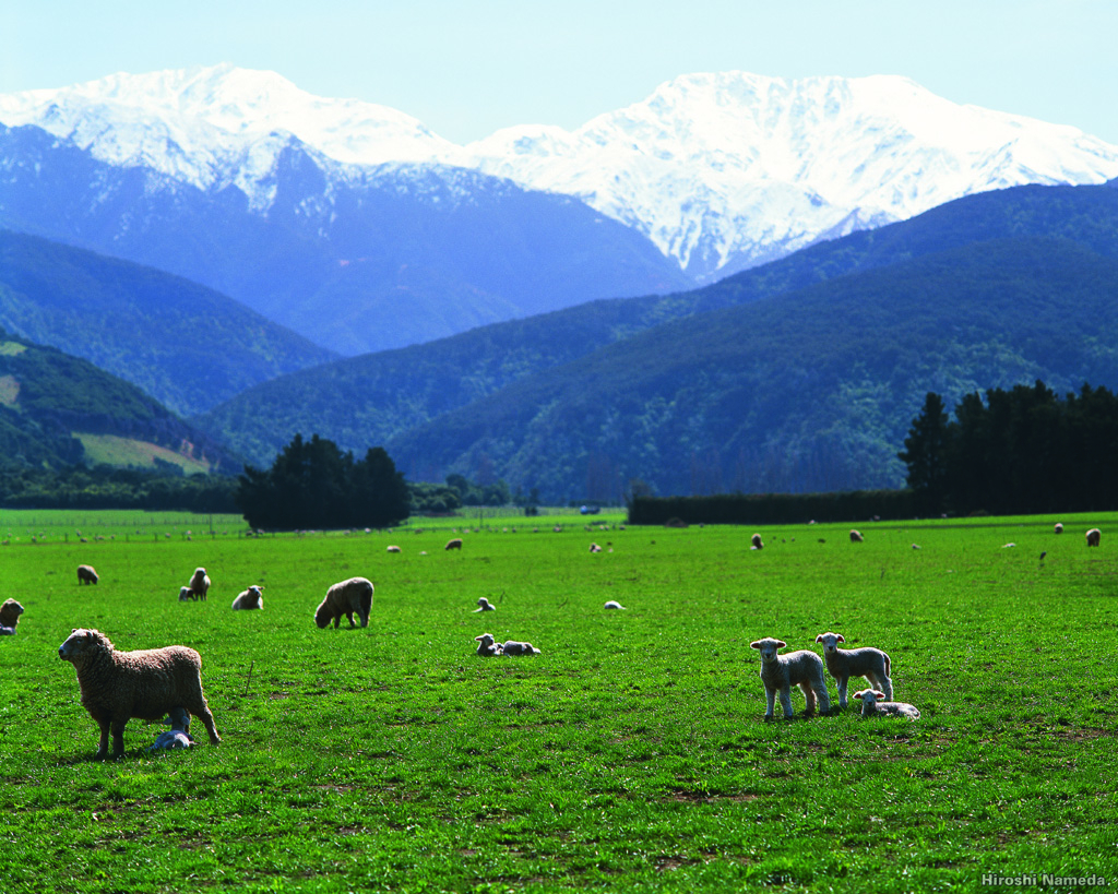 Typical South Island landscape