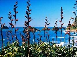 Coromandel Beach, Flax